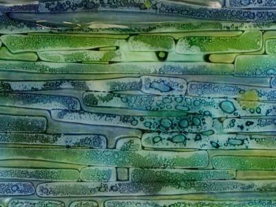 taller vitrofusion  verde azul
